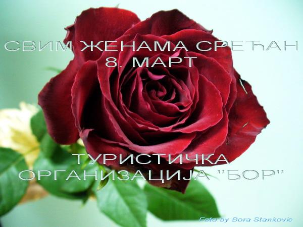 P1020523.ruza-бс